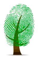 Пробник «свадебного дерева» для того, чтобы гости предварительно потренировались...